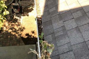 Weeds growing in gutter